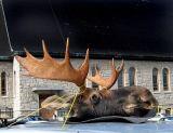 le trophée de chasse de la Malbaie