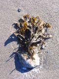 le pot de fleurs plein d'algues