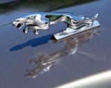 le jaguar de la Jaguar