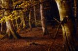16th November 2009  leaves