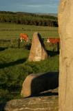 25th June 2008  stones