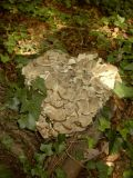 Fungi Photos from Members & Friends (2006)