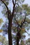 Ooline Trees ~ Tregole National Park