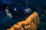 Bonaire Underwater Scenes