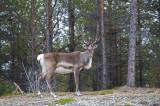 Trek Finland 2008