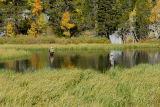 Trout fishing near Lake Sabrina