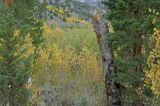Green Creek 4