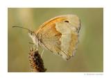 Macro / Papillons