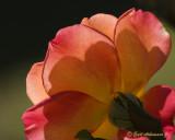 Leaves & Flowers as Art