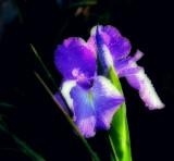 Jo's flowers