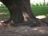 Capitol Park Squirrels