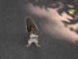 Demon Squirrel!