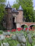 Tulips on the outskirts of Brussels