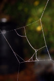 Cobweb Kite