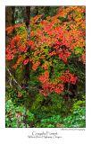 Crayola Forest.jpg