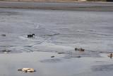Dry lake Delton 10.JPG