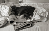 DSC02805 Laundry Folding Time
