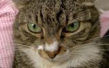 P1060668 Macro Louie's Eyes