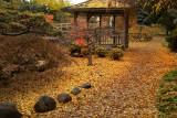 Kasugai Autumn #1