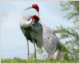 Bird Show (1)