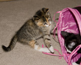 Ahmree and Boots play in the tunnel