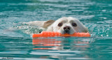dock_dogs_2008