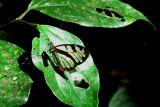 Costa Rica '06