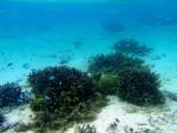 Snorkeling Tumon Bay, Guam