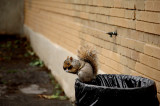 Urban squirrel, or the Ghost of a homeless.