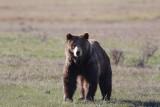 Bear 410