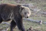 Bear 380