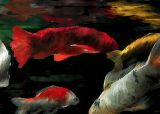 fishes 12x8.5