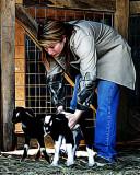 sue goats 8x10 08.jpg