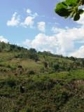 Burundi (6).jpg