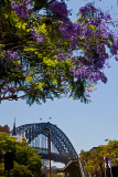 Sydney Harbour Bridge and jacaranda