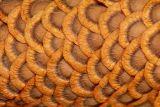 Inside a milkweed seedpod
