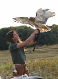 Red-tail wants to fly
