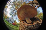 Fungus 9303.jpg