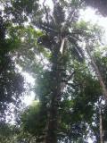 Khao Pra Bang Khram (Khao Nor Chuchi)