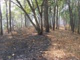 Firebreak Trail, Doi Chiang Dao
