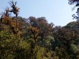 moss forest, Doi Inthanon summit