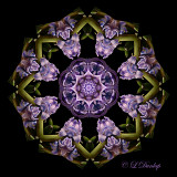 Kaleidoscopes From Nature Images