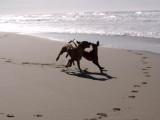 Surf Beach 12-6