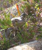 July 08 a toad at Sligachan Skye