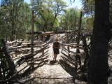 Martina walks through a corral
