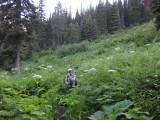 Thick vegetation- good for hiding bears