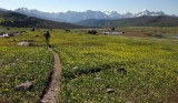 Hiking high meadows in Glacier NP