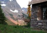Deer visiting Granite Chalet