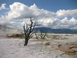 Mammoth Springs, Yellowstone NP