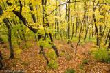 Autumn Pillars